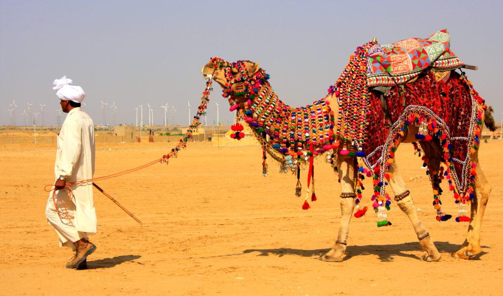Camel Desert Safari, Camping Tours, Luxury Tents