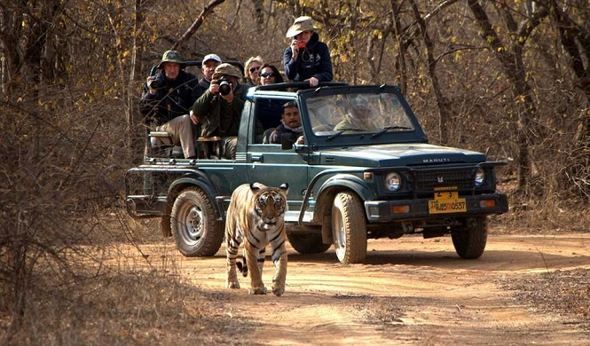 Wildlife Safari in Ranthambore National Park